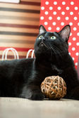 Portrait of a black cat pet lying near the red shopping paper ba — Stock Photo