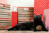 Big black cat laying among shopping bags — Stock Photo