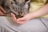 Unrecognizable woman feeding her tabby cat at home — Stock Photo