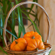 Pumpkins in basket — Stock Photo #34272545