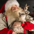 Santa Claus with his cat at home — Stock Photo #36520363