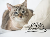 Cute tabby cat at home - laying on sofa and hunting on fake drawing mouse — Stock Photo