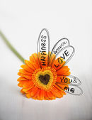 Heart from orange daisy-gerbera on white table with drawing sketch of divination — Stock Photo