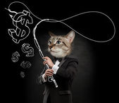 ビジネス男猫頭 — ストック写真