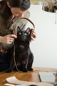 Woman giving headphones to her cat — Stock Photo