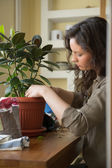 Woman planting ficus tree in pot — Stock Photo