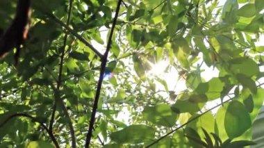 Sunshine Through Leaves - Slider Shot — Stock Video