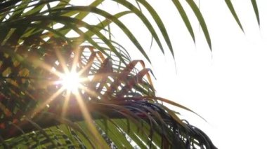 Sunshine and palm leaves — Stock Video