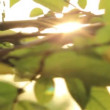 Sunshine and Leaves slider 1 — Stok Video #22921532