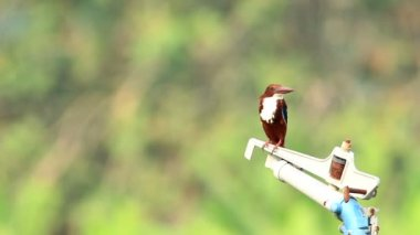 Kingfisher And Tractor With Sound — Vídeo de Stock