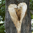 Stock Photo: Heart on tree trunk