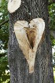 Heart on tree trunk — Stock Photo