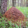 Anthill — Stock Photo #12718835