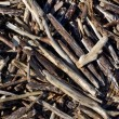 Driftwood — Stock Photo