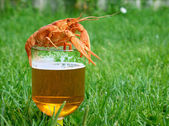 Beer with crayfish — Stock Photo