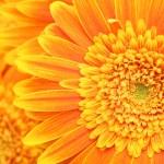 Flower background — Stock Photo #25120695