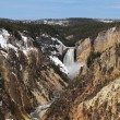 Yellowstone national park - lower falls — Stock Photo