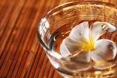 Frangipani blossom — Stock Photo
