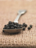 Peppercorn — Photo