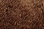 Floor mat — Stock Photo