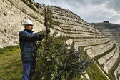 Italy, Maddaloni (Naples), cement factory, stone pit hill, ecological green replanting — Stock Photo