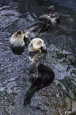 Portugal, Lisbon, Lisbon Oceanarium (Ocean rio de Lisboa), sea otters — Photo