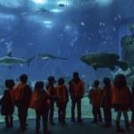Lisbon Oceanarium. School children look at tropical fish — Stock Photo