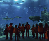 Lisbon Oceanarium. School children look at tropical fish — Stock Photo