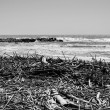 Mediterranean Sea, boles and canes carried on the beach by the sea waves — Foto Stock