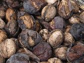 Italy, Sicily, fresh nuts — Stock Photo