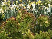 Italy, Sicily, succulent plants in a garden — Stock Photo