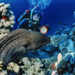 SUDAN, Red Sea, U.W. photo, tropical moray eel  and scuba diver — Stock Photo