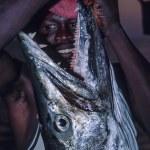 ������, ������: Great barracuda Sphyraena barracuda