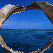 Stock Photo: Shark jaws