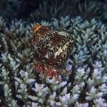 Hermit crab — Stock Photo #27691411