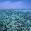 Sanghaneb coral Reef — Stock Photo