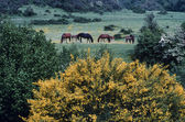 Horses in a field — Stock Photo