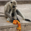 Monkey plays with flowers — Stock Photo