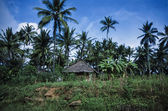 Coconut trees and a typical kenyan house — Stock Photo