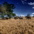 Kenya, Taita Hills National Park, wild african elephants — Stock Photo