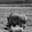 Female rhino with her baby — Stock Photo #32577817