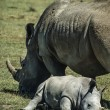 Female rhino with her baby — Stock Photo #32578037