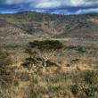 Kenya, Taita Hills National Park, panoramic view of the park — Stock Photo