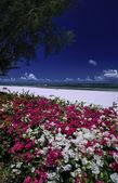 Kenya, Indian ocean, Malindi, view of the beach — Stock Photo