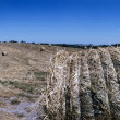 Italy, Lazio, countryside, harvested hay field — Stock Photo
