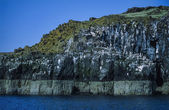 Scotland, Isle of May, seagulls and cormorants on a rocky wall — Stock Photo