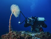 Underwater photographer taking pictures of a nudibranch — Stock Photo