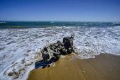 Bole carried ashore — Stock Photo