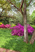 Rhododendron Bushes in Summer Garden — Stock Photo