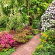 Rhododendron Bushes in Summer Garden — Stock Photo